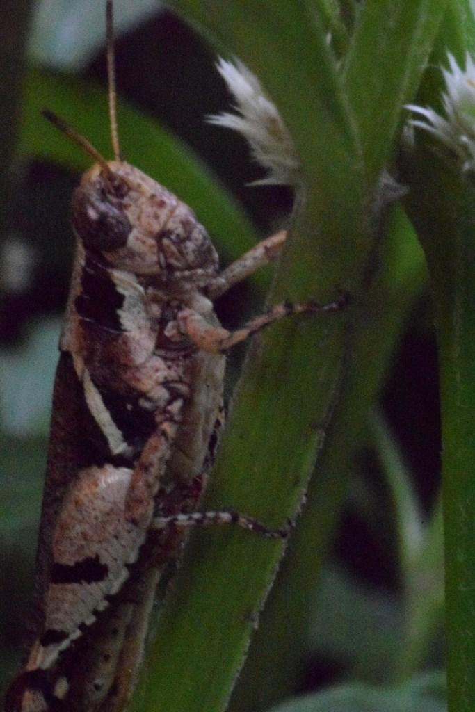 insects macro 2 Convert Nikon lens into macro photography lens.