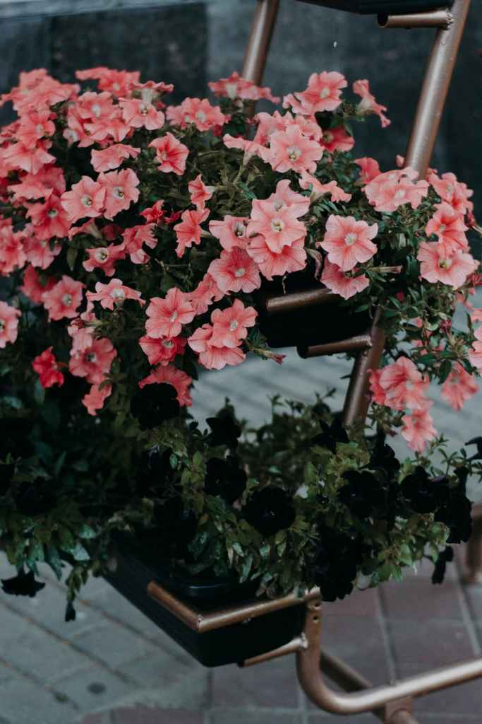 Ikebana art of flower arrangement petunia flowers