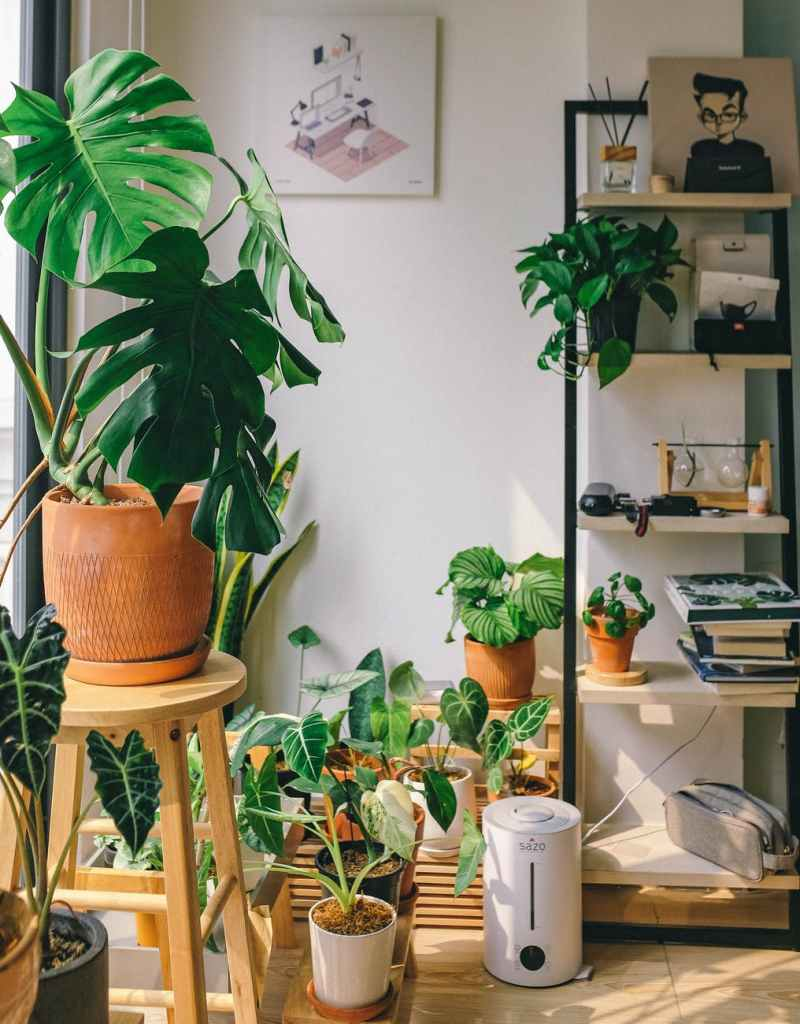 Indoor plants for clean and cool air