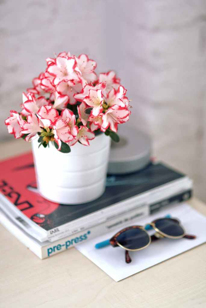 Ikebana, Moribana, Flowerography azalea in a white pot