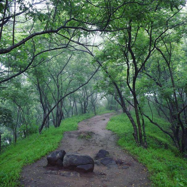 Chauari Devi Dongar trek infromation