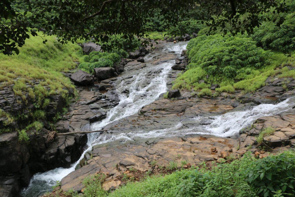 20200926112316 IMG 7983 Andharban Jungle trek Pune