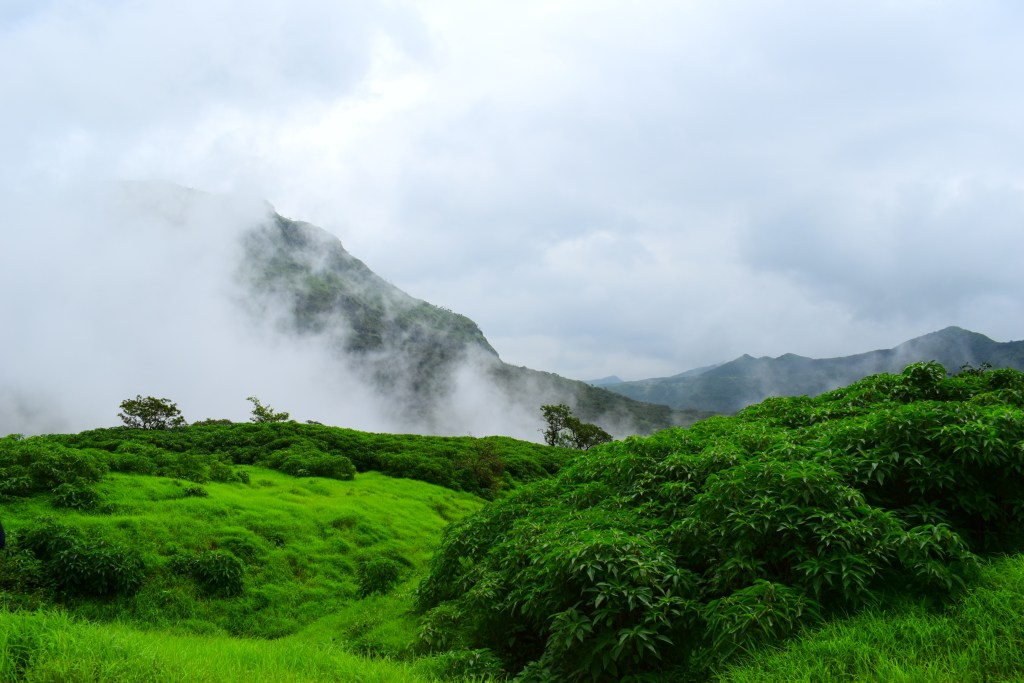 DSC 0456 Andharban Jungle trek Pune