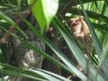 tropicalowls