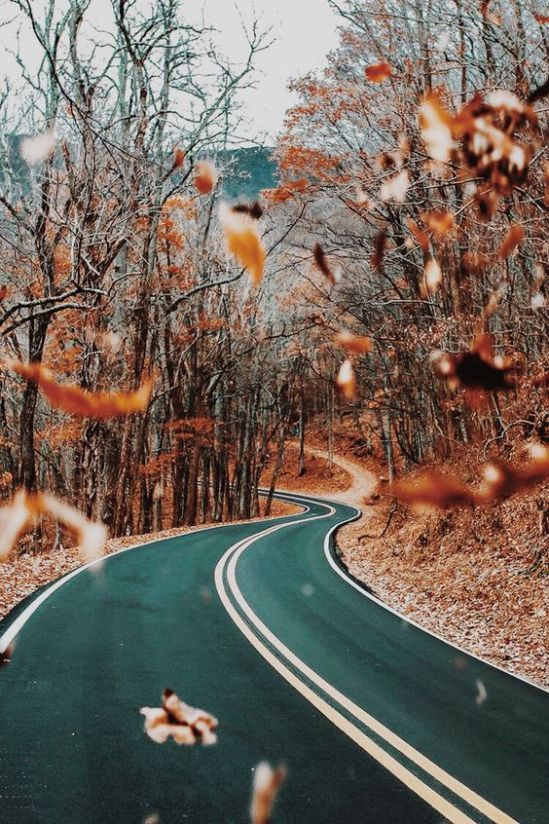 8 Fall Road Trips You Have To Go On This Year