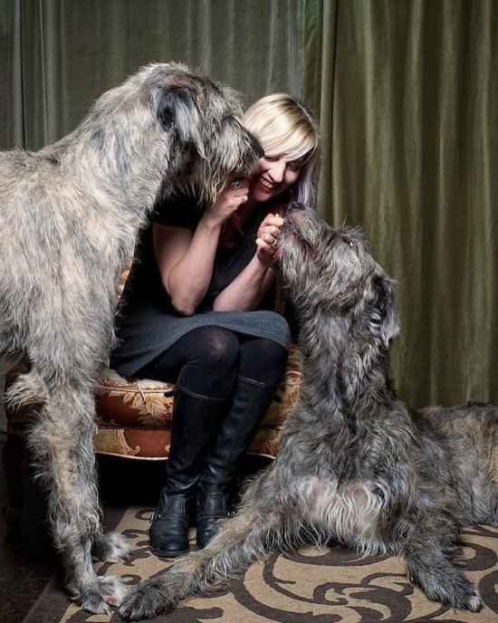10 Underrated Dog Breeds You Need To Know About
