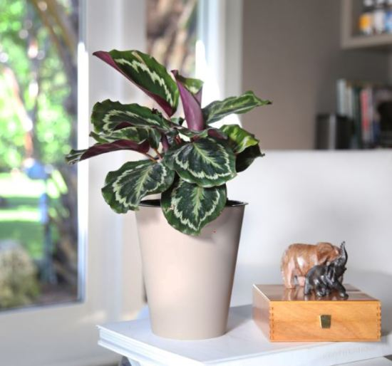 10 Indoor Plants That Thrive In Dorm Rooms