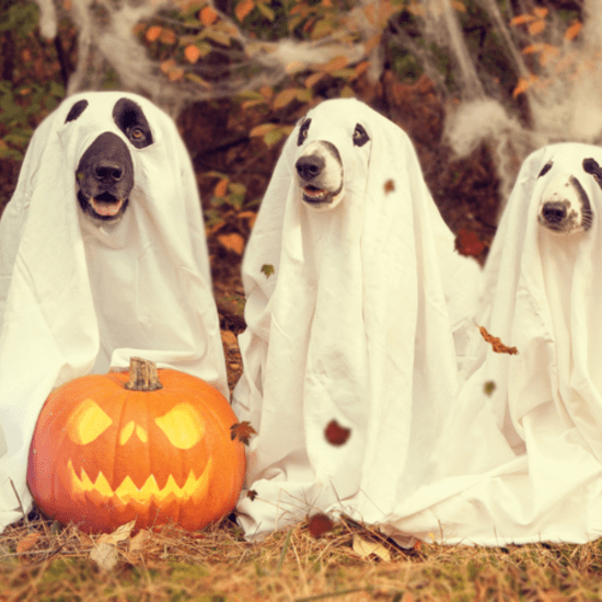 50 Songs Perfect For Your Halloween Party Playlist