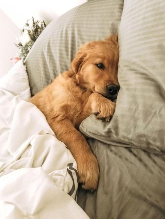 Dog Zodiac Sign Perfect Pet Horoscope