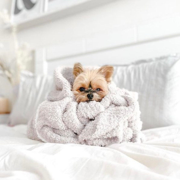 What Quarantine Puppy You Should Bring Home Based On Your Zodiac Sign