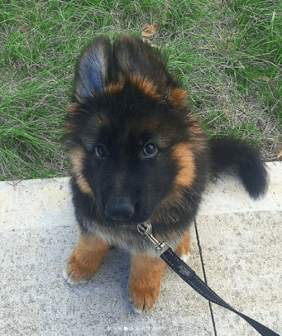 8 Things To Know When Getting A New Puppy