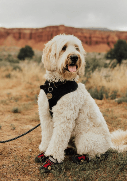 5 Cute Dog Instagram Profiles You Need To Follow RN