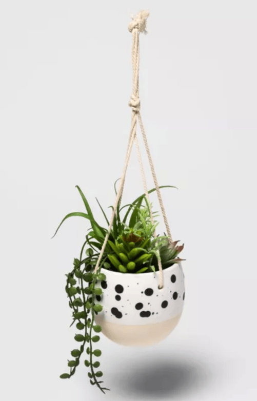 Hanging plant for a fresh and mood boosting aroma
