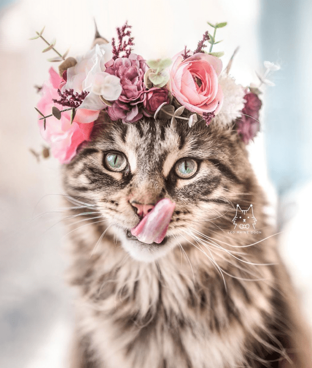 20 Cute Cat Instagrams You Should Follow