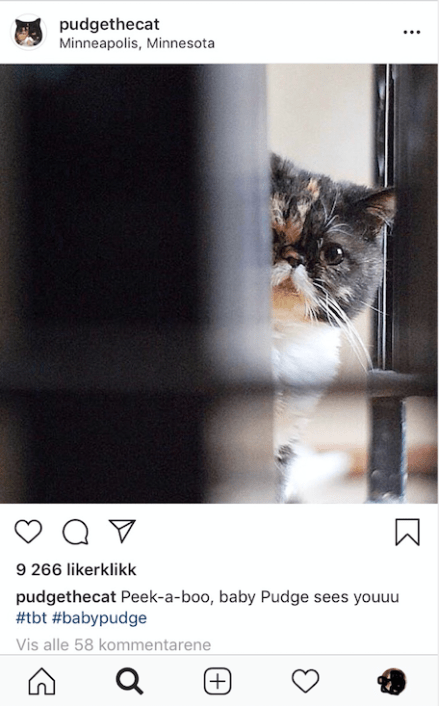 8 Instagram Pets That Will Make Your Heart Happy