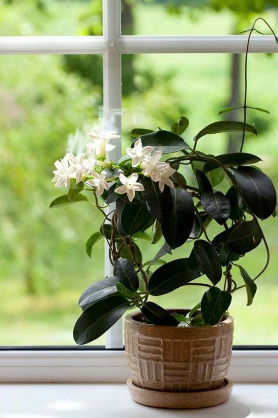 12 Best Smelling Houseplants As Natural Air Fresheners