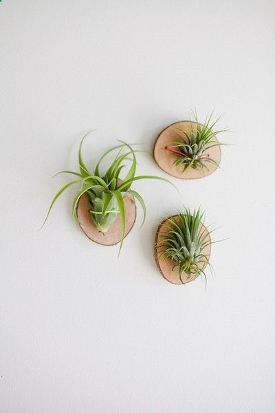 10 Stylish Indoor Plants For Obsessed Plant Moms