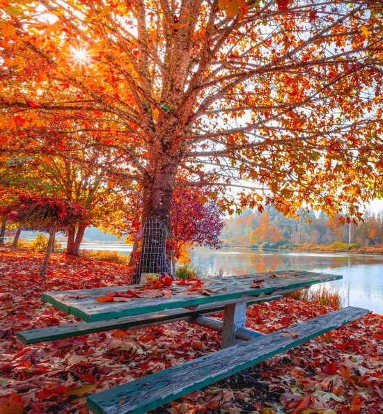 Fall Events In The Boston Area You Have To Check Out