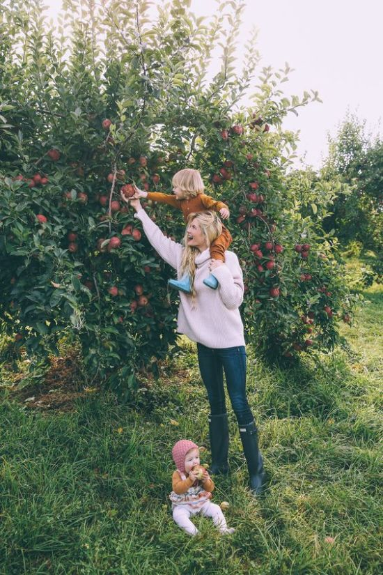 The Best Apple Picking Spots You Can Visit This Fall