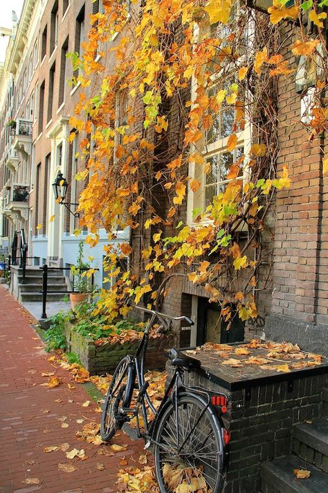 10 Fun Fall Activities To Try In Boston