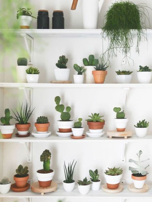 10 Easy Plants Even College Students Can Grow