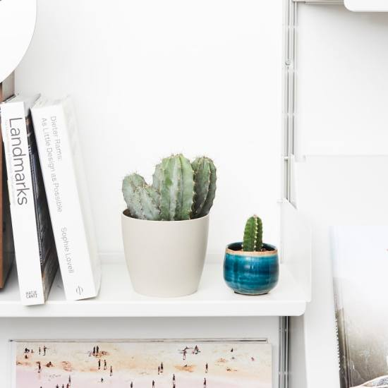 8 Plants That Will Be Perfect For Your Bedroom