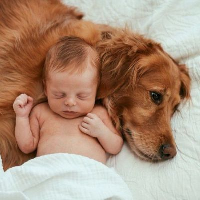 Are You Better Off Having A Dog Or A Child?