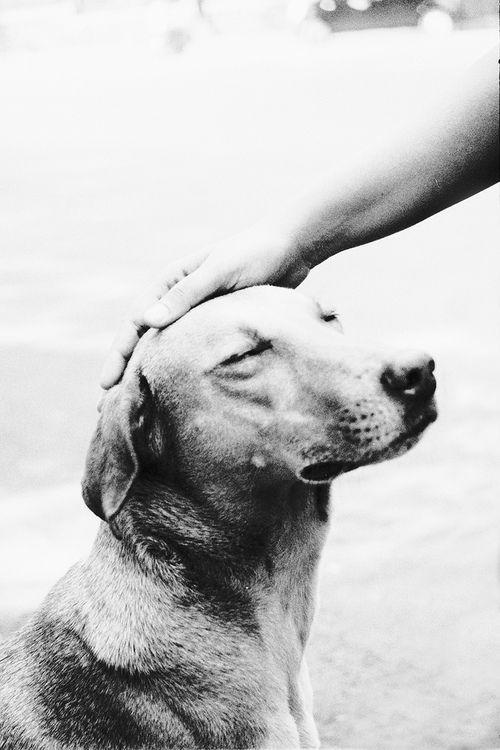 faithful pet