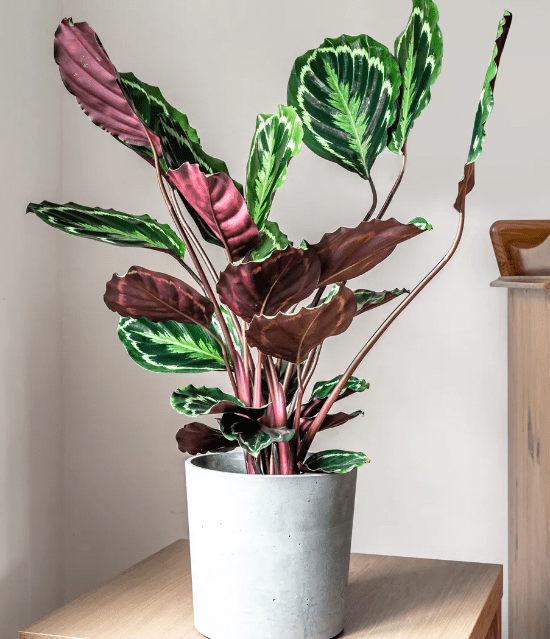 7 Easy Plants To Take Care Of When You Can't Grow Plants