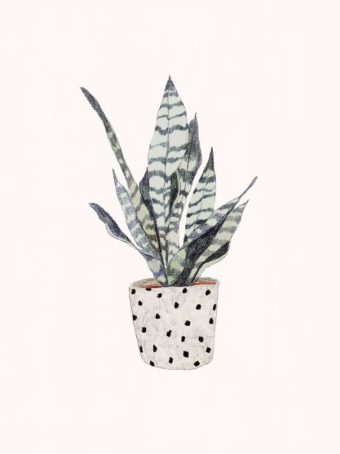 The Perfect Houseplant For You Based On Your Zodiac Sign