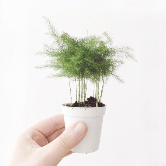 Easy To Grow Plants and Herbs That Can Survive In Your College Apartment