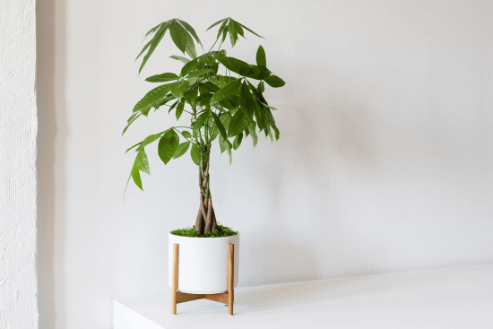 10 House Plants That Will Make Your Place Look Great