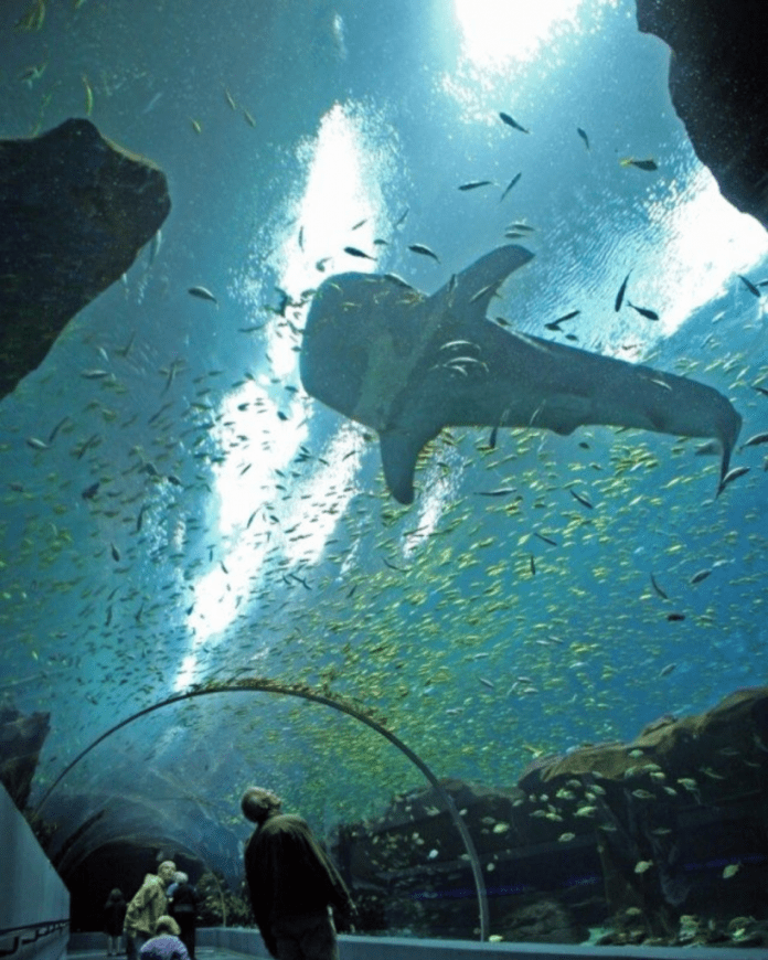 10 Things To Do At The Atlanta Aquarium!
