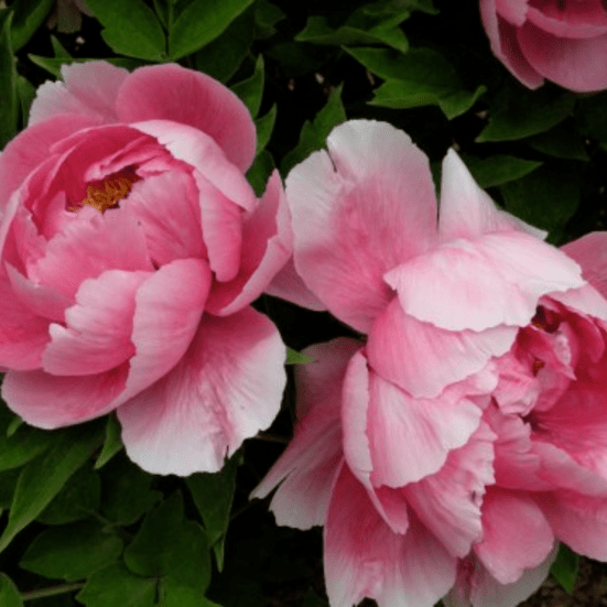 Top 8 Plants to Grow This Summer – With No Risk Of Them Dying