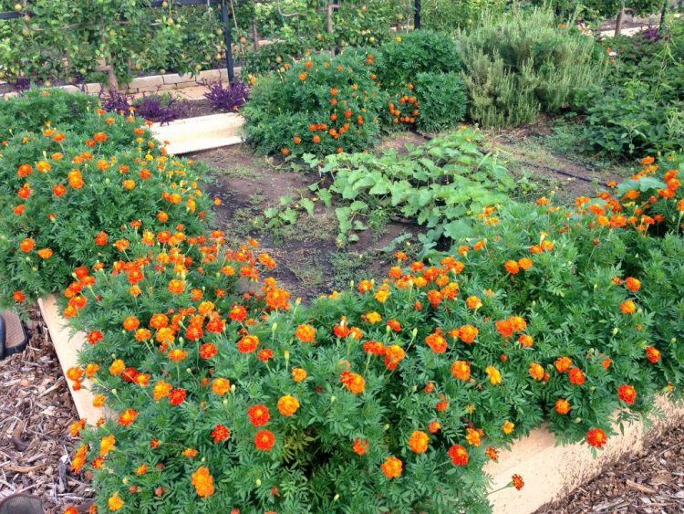 Gardening Tips For Summer 2020 That Will Have Your Garden Flourishing