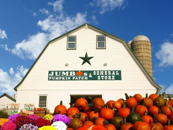 Pumpkin Patches You Need To Consider Visiting This Autumn