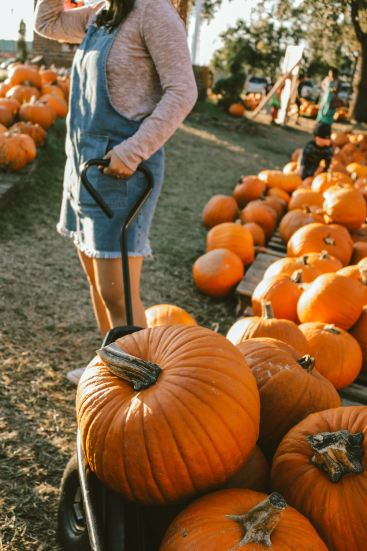 The Ultimate Fall Break Bucket List You Have To Follow