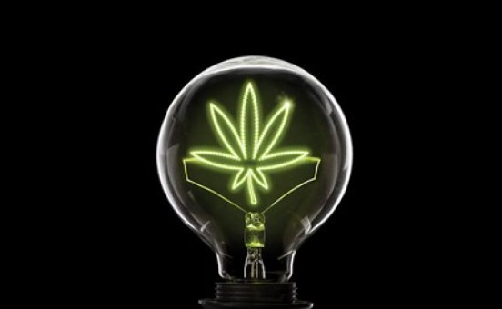 Types of Marijuana Strains for Different Effects