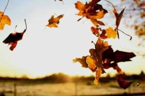 falling, leaves