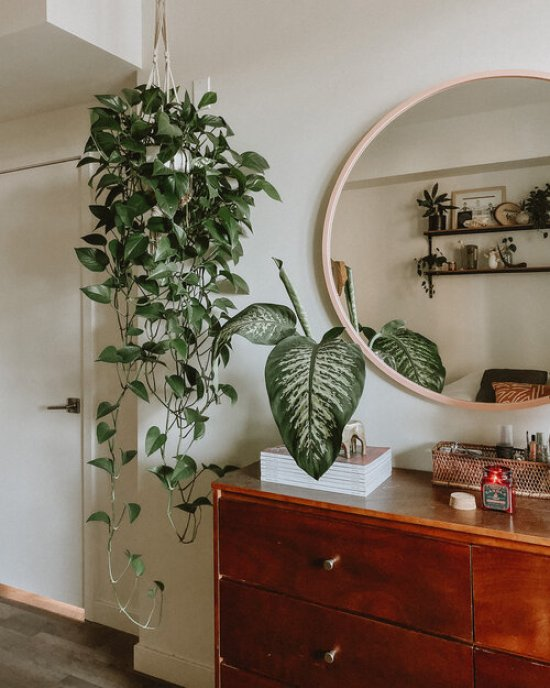 10 House Plants To Add Some Green To Your Space