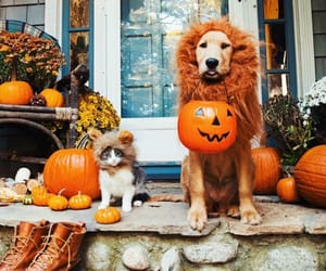 cat, dog, cute, halloween