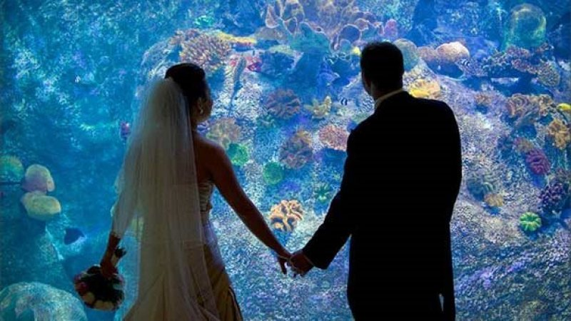 sea-life-sydney-aquarium-weddings