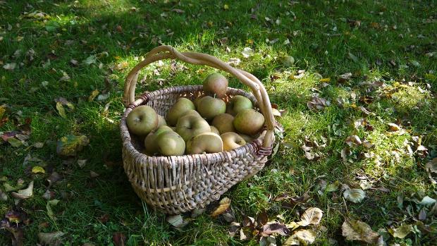 aa-apple