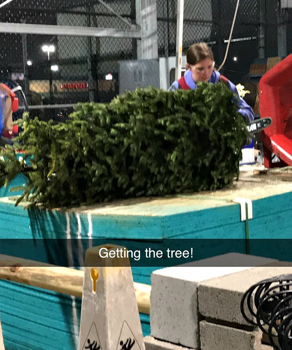 getting the tree at Lowes