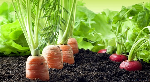 Growing Your Own Food For Total Beginners