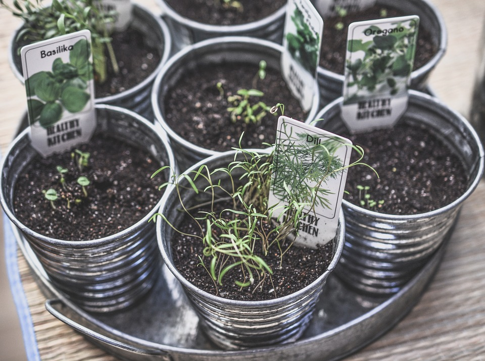 Growing Your Own Food: Expanding A Hobby To Lifestyle