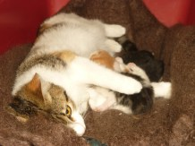Spice with her kittens