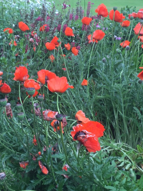 The lovely front garden includes poppies, a fitting flower since the school and the chapel include tributes to the more than 200 Giggleswick School alumni who were lost in the Great War. Eight hundred served.