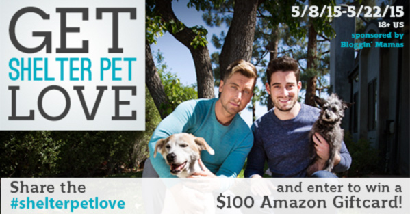 #shelterpetlove $100 Amazon Giftcard Giveaway