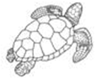 Sea Turtles on Hilton Head
